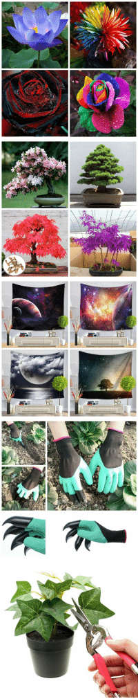 winner001fan: Super Hot and Creative Garden Items Collection Seads: 1. Blue Lotus Seeds / Rainbow Chrysanthemum Seeds  2. Black Rose Seeds // Rainbow Rose Seeds  3. Pink Cherry Blossom Seeds // Cedar Semillas Seeds  4. Red Maple Seeds // Purple Maple Seeds  Wall Hanging Tapestry: 56 . Galaxy Wall Hanging Tapestry  7. Sky Sea Tapestry  // Starry Universe Tapestry  8. Gardening Digging Gloves / Loskii Pruning Scissors  15% OFF Discount Code: happy15 ❤Christmas Big Sale 2018 Here ❤ : winner001fan: Super Hot and Creative Garden Items Collection Seads: 1. Blue Lotus Seeds / Rainbow Chrysanthemum Seeds  2. Black Rose Seeds // Rainbow Rose Seeds  3. Pink Cherry Blossom Seeds // Cedar Semillas Seeds  4. Red Maple Seeds // Purple Maple Seeds  Wall Hanging Tapestry: 56 . Galaxy Wall Hanging Tapestry  7. Sky Sea Tapestry  // Starry Universe Tapestry  8. Gardening Digging Gloves / Loskii Pruning Scissors  15% OFF Discount Code: happy15 ❤Christmas Big Sale 2018 Here ❤