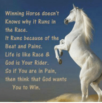 winning: Winning Horse doesn't  Knows why it Runs in  the Race.  It Runs because of the  Beat and Pains.  Life is like Race &  God is your Rider.  So if you are in Pain,  then think that God wants  you to Win.