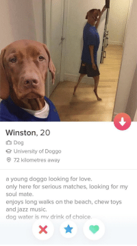 Love, Music, and Beach: Winston, 20  Dog  e University of Doggo  O 72 kilometres away  a young doggo looking for love.  only here for serious matches, looking for my  soul mate.  enjoys long walks on the beach, chew toys  and jazz music.  dog water is mv drink of choice. Such a good boy