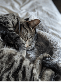 Cuddly and Winston: Winston Purrhill is so cuddly