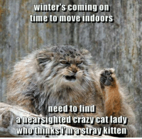 Winters Coming: winter coming on  time to move indoors  need to find  a nearsighted Crazy Cat lady  Who thinksimastray kitten