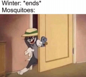 Winter, Live, and Romania: Winter: *ends*  Mosquitoes: Worst thing is to live in the countryside of Romania