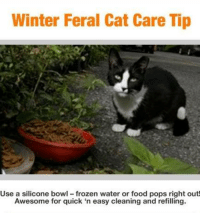 Winter Feral Cat Care Tip  Use a silicone bowl frozen water or food pops right out!  Awesome for quick 'n easy cleaning and refilling. **SILICONE BOWLS WORK GREAT IN WINTER, WHEN WATER  FREEZES QUICKLY!**