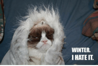 Winter, I hate it! ): Join Pusheen the Cat :): WINTER.  I HATE IT Winter, I hate it! ): Join Pusheen the Cat :)
