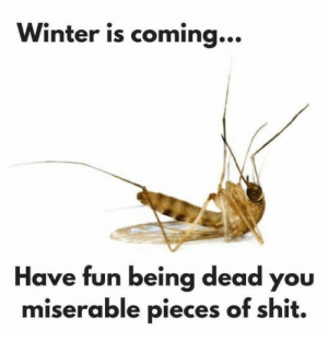 Literally no sympathy: Winter is coming...  Have fun being dead you  miserable pieces of shit. Literally no sympathy
