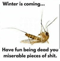 Memes, Winter, and Piece of Shit: Winter is coming  Have fun being dead you  miserable pieces of shit. RealFuckingFacts