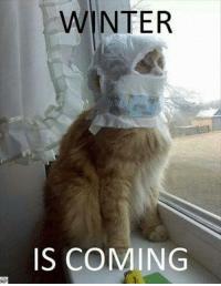 Prepare yourselves!: WINTER  IS COMING Prepare yourselves!
