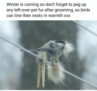 "Winter, Xxx, and Birds: Winter is coming so don't forget to pea up  any left-over pet fur after grooming, so birds  can line their nests in warmth xxx <p>Wholesome tip for those heading into winter :) via /r/wholesomememes <a href=""https://ift.tt/2GHPNXd"">https://ift.tt/2GHPNXd</a></p>"