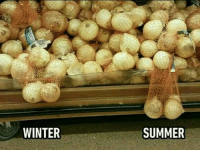 Funny, Winter, and Summer: WINTER  SUMMER Dudes know. https://t.co/oBtFdKRil6