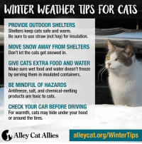 Memes, Ally, and Weather: WinTER WEATHER TIPS FOR CATS  PROVIDE OUTDOOR SHELTERS  Shelters keep cats safe and warm.  Be sure to use straw (not hay) for insulation.  MOVE SNOW AWAY FROM SHELTERS  Don't let the cats get snowed in.  GIVE CATS EXTRA F00D AND WATER  Make sure wet food and water doesn't freeze  by serving them in insulated containers.  BE MINDFUL OF HAZARDS  Antifreeze, salt, and chemical melting  products are toxic to cats.  CHECK YOUR CAR BEFORE DRIVING  For warmth, cats may hide under your hood  or around the tires.  Alley Cat Allies  alleycat.org/WinterTips Kitty, it's cold outside! Give outside cats a helping hand with these winter tips. Learn more at alleycat.org/WinterTips.
