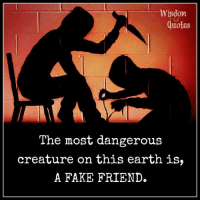 Fake, Earth, and Wisdom: Wisdom  uotBS  The most dangerous  creature on this earth is,  A FAKE FRIEND. www.wisdomquotes4u.com
