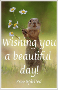 Have a great day!: Wishing you  a beautiful  Free Spirited Have a great day!