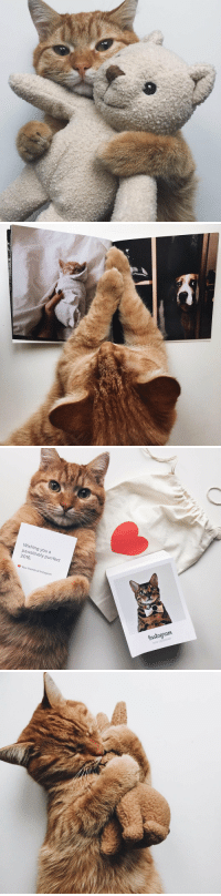 Cute, Friends, and Instagram: Wishing you a  pawsitively purrfect  2016.  Your friends at Instagram <p>Can't contain how cute this is.<br/></p>