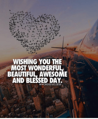 Beautiful, Blessed, and Memes: WISHING YOU THE  MOST WONDERFUL  BEAUTIFUL, AWESOME  AND BLESSED DAY.  @WORDS2 SUCCESS Have a good one🙏 words2success - TAG someone who can use this right now👇 Follow @livelifemotivation