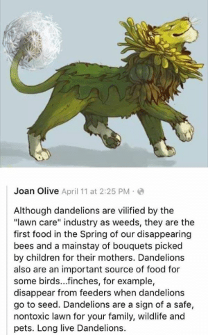 witchesversuspatriarchy:  🌼 love your dandy lions 🌼: witchesversuspatriarchy:  🌼 love your dandy lions 🌼