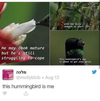 Memes, Tumblr, and Hummingbird: with the datty  demands of adult fe  He may Look mature  but he's still  struggling to cope  This hummingbird's day  is about to get even Worse.  @mollyblob Aug 12  this hummingbird is me Tumblr post!!