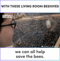 Memes, Living, and Bees: WITH THESE LIVING ROOM BEEHIVES  attn:  COURTESY OF BEE SYSTEM  we can all hel  save the bees, These indoor beehives are helping to save the bees