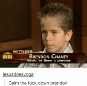 Calm the fuck down brendon by ItzSpiffy654 MORE MEMES: WITNESS  BRENDON CHANEY  Admits he threw a pinecone  jesusdoesyoga:  Calm the fuck down brendon Calm the fuck down brendon by ItzSpiffy654 MORE MEMES