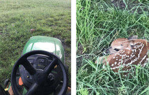"""Deer, Food, and Water: WN OSERIES Came within 2 feet of running this guy over. It's """"fawning season"""" so be careful out there when mowing. Mother deer will leave their newborn hidden in tall grass while they go find food and water."""