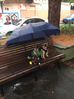 wnslw:  hydrolize:  Someone left their dogs outside the cafe  pug date : wnslw:  hydrolize:  Someone left their dogs outside the cafe  pug date