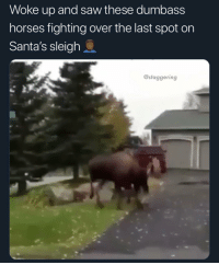 Don't scroll by without telling me what you want for Christmas @larnite • ➫➫➫ Follow @Staggering for more funny posts daily!: Woke up and saw these dumbass  horses fighting over the last spot on  Santa's sleigh  @staggering Don't scroll by without telling me what you want for Christmas @larnite • ➫➫➫ Follow @Staggering for more funny posts daily!