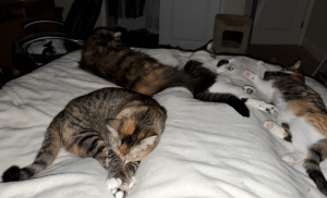 Woke up at 2am feeling a bit smothered - you know it's cold when all the cats want to cuddle!: Woke up at 2am feeling a bit smothered - you know it's cold when all the cats want to cuddle!