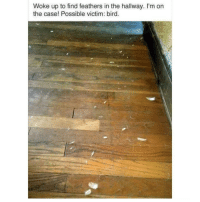 Memes, 🤖, and Case: Woke up to find feathers in the hallway. I'm on  the case! Possible victim: bird.