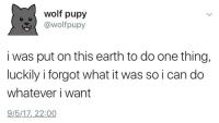 "Tumblr, Blog, and Earth: wolf pupy  @wolfpupy  i was put on this earth to do one thing,  luckily i forgot what it was so i can do  whatever i want  9/5/17, 22:00 <p><a href=""https://insanelyfriendlyguy.tumblr.com/post/162379770221"" class=""tumblr_blog"">insanelyfriendlyguy</a>:</p><blockquote><figure class=""tmblr-full"" data-orig-height=""630"" data-orig-width=""1200""><img src=""https://78.media.tumblr.com/850c9ca97183c7d848e8065eefa823bf/tumblr_inline_osaemenwoH1tm0k2n_540.jpg"" data-orig-height=""630"" data-orig-width=""1200""/></figure></blockquote>"