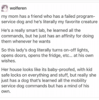 his is so precious I would like one pls thank - Max textpost textposts: wolferen  my mom has a friend who has a failed program  service dog and he's literally my favorite creature  He's a really smart lab, he learned all the  commands, but he just has an affinity for doing  them whenever he wants  So this lady's dog literally turns on-off lights,  opens doors, opens the fridge, etc... at his own  wishes.  Her house looks like its baby-proofed, with kid  safe locks on everything and stuff, but really she  just has a dog that's learned all the mobility  service dog commands but has a mind of his  OWn his is so precious I would like one pls thank - Max textpost textposts