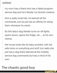 Funny, Good, and House: wolferen:  my mom has a friend who has a failed program-  service dog and he's literally my favorite creature  He's a really smart lab, he learned all the  commands, but he just has an affinity for doing  them whenever he wants  So this lady's dog literally turns on-off lights,  opens doors, opens the fridge, etc... at his owrn  wishes.  Her house looks like its baby-proofed, with kid  safe locks on everything and stuff, but really she  just has a dog that's learned all the mobility  service dog commands but has a mind of his  own.  The chaotic good boy  funny.ce Lawful good-boys are great pups too, but there's just something special about a chaotic good-boy. #DoggosAndDragons  - Leopold the Just