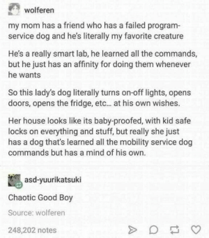 Chaotic good boy: wolferer  my mom has a friend who has a failed program-  service dog and he's literally my favorite creature  He's a really smart lab, he learned all the commands,  but he just has an affinity for doing them whenever  he wants  So this lady's dog literally turns on-off lights, opens  doors, opens the fridge, etc... at his own wishes.  Her house looks like its baby-proofed, with kid safe  locks on everything and stuff, but really she just  has a dog that's learned all the mobility service dog  commands but has a mind of his own.  asd-yuurikatsuki  Chaotic Good Boy  Source: wolferen  248,202 notes Chaotic good boy