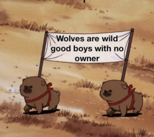 And that's a fact: Wolves are wild  good boys with no  Owner And that's a fact