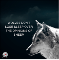 Love this from Educate Inspire Change: WOLVES DON'T  LOSE SLEEP OVER  THE OPINIONS OF  SHEEP.  EducateinspireChange Love this from Educate Inspire Change
