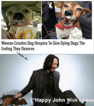 Dogs, John Wick, and Memes: Woman Creates Dog Hospice To Give Dying Dogs The  Ending They Deserve  u/sejin .mb  *Happy John Wick noises Everyone liked that via /r/memes https://ift.tt/2YnyGlp