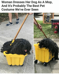 Follow me @antisocialtv @lola_the_ladypug @x__social_butterfly__x @x__antisocial_butterfly__x: Woman Dresses Her Dog As A Mop,  And It's Probably The Best Pet  Costume We've Ever Seen Follow me @antisocialtv @lola_the_ladypug @x__social_butterfly__x @x__antisocial_butterfly__x