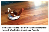 Roomba, Chicken, and House: Woman Shocked to Find a Chicken Snuck Into Her  House & Was Riding Around on a Roomba