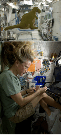 Dinosaur, Food, and Nasa: womeninspace:  NASA astronaut Karen Nyberg is a self proclaimed crafter. A week ago she made a stuffed dinosaur from scraps on the space station. The little T-rex is made form the lining of Russian food containers and the toy is stuffed with scraps from an old T-shirt. While many toys have flown into space, this is the first produced in space. Photos: Karen Nyberg, via CollectSpace