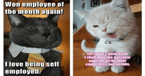 Every week we collect the highest voted cat memes that our users created for ICanHas Cheezburger's LOLCats.#cats #lolcats #funnycats #catmemes #funnymemes #: Won employee of  the month again!  For today's good deed  I shallgo to the pet store  and free all the poor  caged mice and gerbils.  T love being self  employed Every week we collect the highest voted cat memes that our users created for ICanHas Cheezburger's LOLCats.#cats #lolcats #funnycats #catmemes #funnymemes #