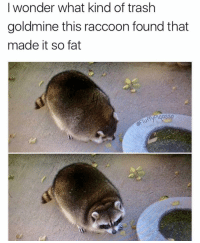 Fat Raccoon: wonder what kind of trash  goldmine this raccoon found that  made it so fat
