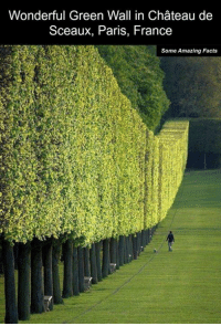 Facts, Memes, and Amaz: Wonderful Green Wall in Chateau de  Sceaux, Paris, France  Some Amazing Facts