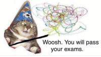Will, You, and  Woosh: Woosh. You will pass  our exams