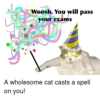 "<p>Wholesome wizard cat via /r/wholesomememes <a href=""http://ift.tt/2ioNglU"">http://ift.tt/2ioNglU</a></p>: Woosh. You will pass  your exams  A wholesome cat casts a spell  on you! <p>Wholesome wizard cat via /r/wholesomememes <a href=""http://ift.tt/2ioNglU"">http://ift.tt/2ioNglU</a></p>"
