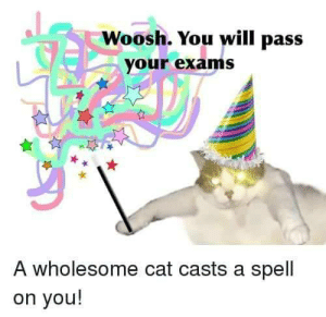 Wholesome wizard cat: Woosh. You will pass  your exams  A wholesome cat casts a spell  on you! Wholesome wizard cat