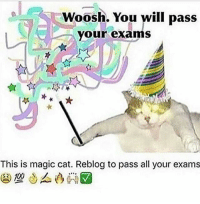 i hope your exams go great ~adeezha (@adeezhaa) - tags: tumblrtextpost tumblrposts textpost tumblr shrek instatumblr memes posts phan funnythings 😂 same funny haha loltumblr lol relatable rarepepe funnythings funnytextposts pepeislife meme funnystuff pepe food spam: Woosh. You will pass  your exams  This is magic cat. Reblog to pass all your exams  100 i hope your exams go great ~adeezha (@adeezhaa) - tags: tumblrtextpost tumblrposts textpost tumblr shrek instatumblr memes posts phan funnythings 😂 same funny haha loltumblr lol relatable rarepepe funnythings funnytextposts pepeislife meme funnystuff pepe food spam