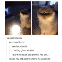"Funny, God, and Memes: wordsandturds:  wordsandturds:  wordsandturds:  telling ghost stories  but they never caught that red dot...""  i hope my cat gets the fame he deserves Can this cat be famous like grumpy cat? Follow me ( @god.of.appleysauce )for more funny tumblr and textpost"