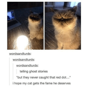 """Horror story cat: wordsandturds:  wordsandturds:  wordsandturds:  telling ghost stories  """"but they never caught that red dot...""""  i hope my cat gets the fame he deserves Horror story cat"""