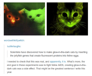 Apparently, Cats, and Goal: wordswithkittywitch:  luciferlaughs:  Scientists have discovered how to make glow-in-the-dark cats by inserting  the jellyfish genes that create fluorescent proteins into feline eggs.  I needed to check that this was real, and apparently, it is. What's more, the  end goal in these experiments was to fight feline AIDs, creating glow-in-the-  dark cats was a side effect. That might be the greatest sentence I write this  year. Glow-in-the-dark cats