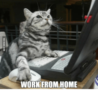 working from home: WORK FROM HOME