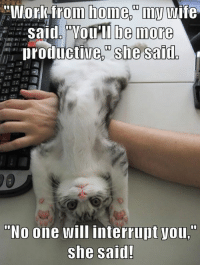 "24 Funny Pictures Of Animals Doing Funny Things With Captions: ""Workfrom home.""my wife  Said. ""VOu'll be more  productive, she said  ""No one will interrupt you,""  she said! 24 Funny Pictures Of Animals Doing Funny Things With Captions"