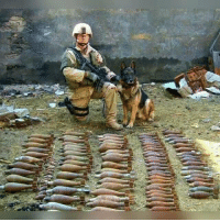 Memes, 🤖, and change.org: Working dogs a great story in pictures, We Thank You'll for your service to your country   Please donate Support and sign Police K-9 Bill Of Rights http://www.change.org/petitions/police-k-9-bill-of-rights-congress-and-senate-representatives# for the medical benefits they deserve and worked for when retired.